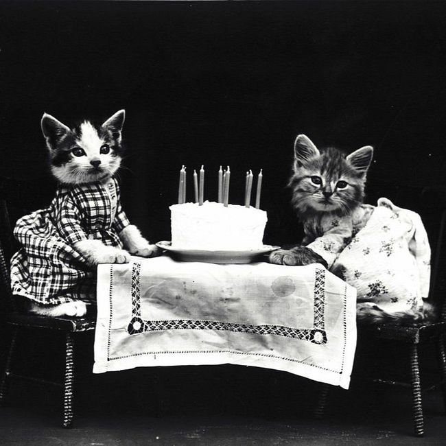 Когда в России прошла первая выставка кошек?