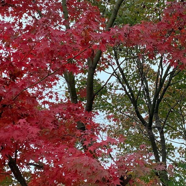 Autumn of Kyoto