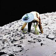 Китайцы прорастили хлопок на обратной стороне Луны