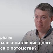Мозг родителя — Вячеслав Дубынин