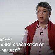 Разнообразие сенсорных систем — Вячеслав Дубынин