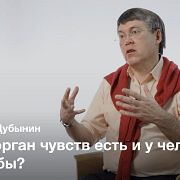 Мозг и обоняние — Вячеслав Дубынин