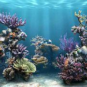 Удивительные обитатели океана