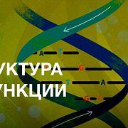 Структура и функции ДНК — курс Максима Франк-Каменецкого / ПостНаука