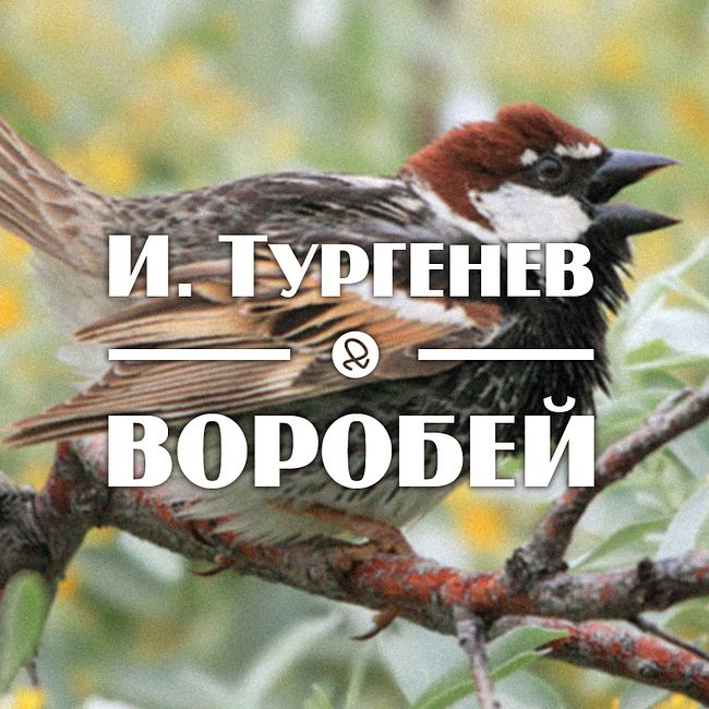 "И. Тургенев ""Воробей"""