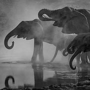 1 Исчезновение слона (Х. Мураками)