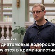 Диатомовые водоросли — Максим Куликовский