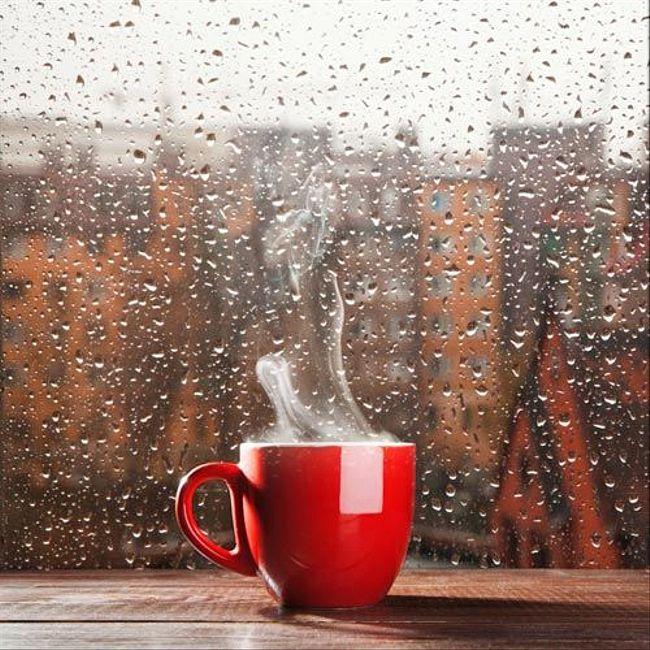 Лев за стеклом; Между кофе и дождем (Алексей Дуров)