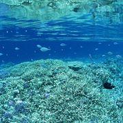 Коралловое море (5)  (слайдкаст)