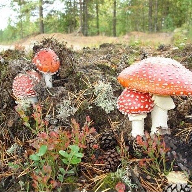 Как отличить ядовитые грибы и как правильно приготовить съедобные, чтобы не отравиться