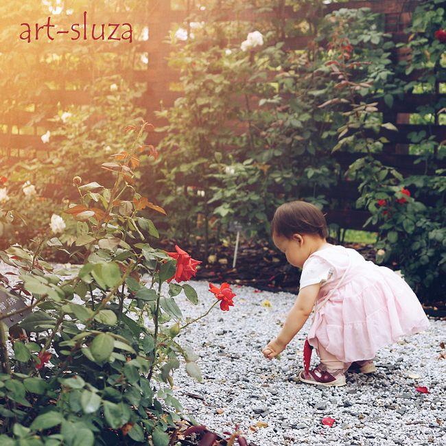 072 - цветы на огороде