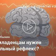 Двигательные центры мозга