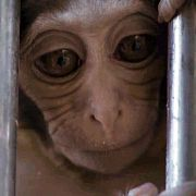 Жизнь учёных и обезьян в Абхазии