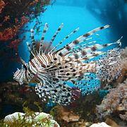 Ядовитые виды рыб