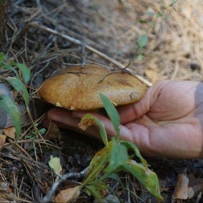ЗаГРИБай: как найти грибной клондайк?