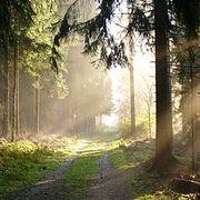 Великие загадки археологии. Впоисках Тевтобургского леса.
