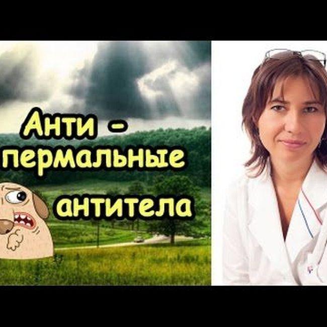 Антиспермальные антитела