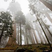 FAQ: Как высоко может вырасти дерево?