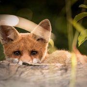 FAQ: Способны ли животные обманывать?