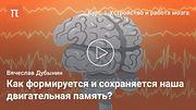 Мозжечок и базальные ганглии