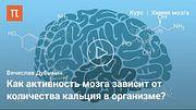 Мозг: работа синапсов