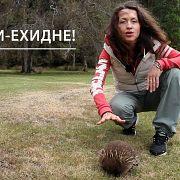 СЛАВА МАТЕРИ-ЕХИДНЕ! // Всё как у зверей #72