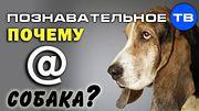 Почему @ собака? (Познавательное ТВ, Артём Войтенков)