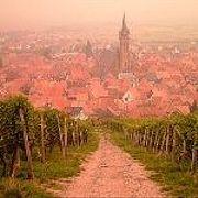 Эльзасское вино (57)