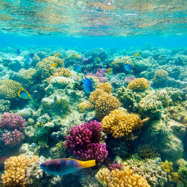 Израиль. Коралловый мир