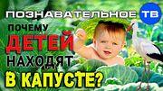 Почему детей находят в капусте? (Познавательное ТВ, Артём Войтенков)