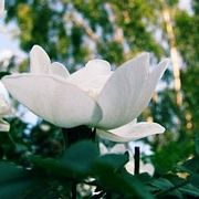 Почему после дождя цветы пахнут сильнее?