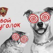 """Законопроект об ответственном обращении с животными вводит понятие """"потенциально опасные породы собак"""""""