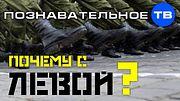 Почему солдаты ходят с ЛЕВОЙ? (Познавательное ТВ, Артём Войтенков)