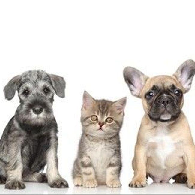 Домашние животные в городской квартире