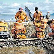 Почему вся российская рыба уходит за рубеж?