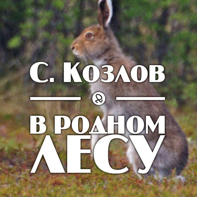 """С. Козлов """"В родном лесу"""""""