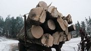 Тайны китайских лесопилок