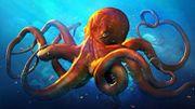Ученые: осьминоги - инопланетяне
