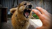 Если собака атакует