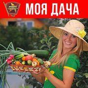 Моя дача : Сажаем айву и другие необычные плодовые, а также разбираемся с перлитом, вермикулитом и вермикомпостом