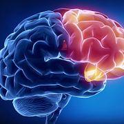 Мозг Великий обманщик