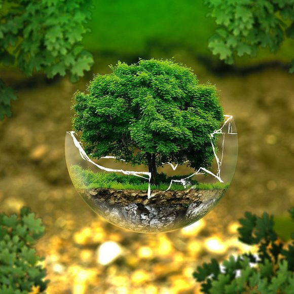Биоразнообразие
