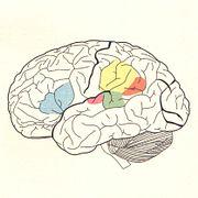 Мозг на ПостНауке
